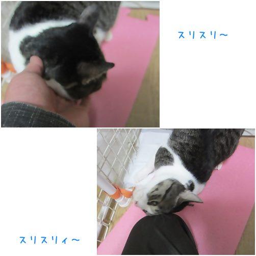cats_201312111841238ed.jpg