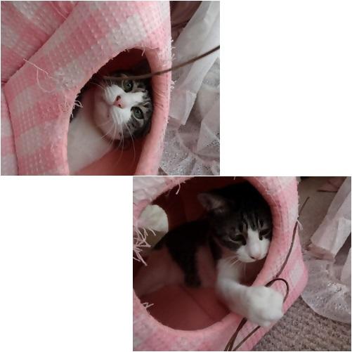 catsb_20131004120601b43.jpg