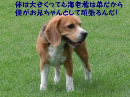 CIMG4607.jpg