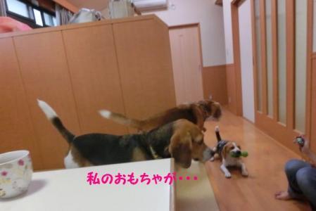 CIMG4885_20130921083935cdc.jpg