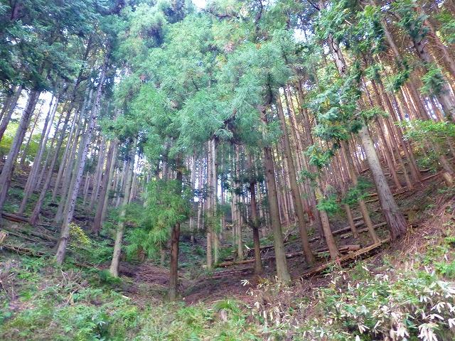 P1000147竹