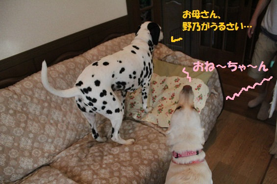 IMG_3779-30.jpg
