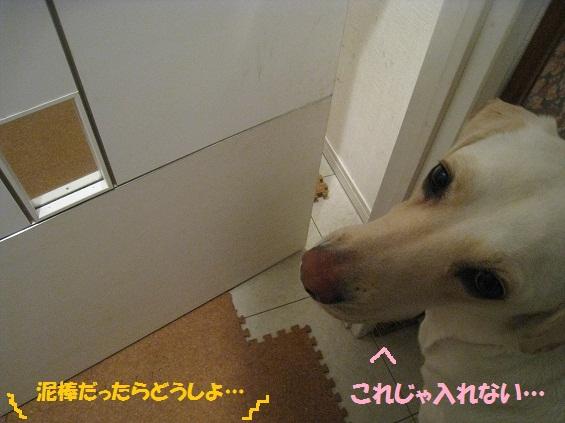 IMG_6216-05.jpg