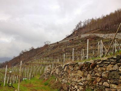 Valtellina.jpg