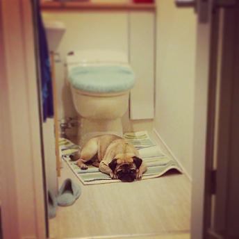 トイレで寝る