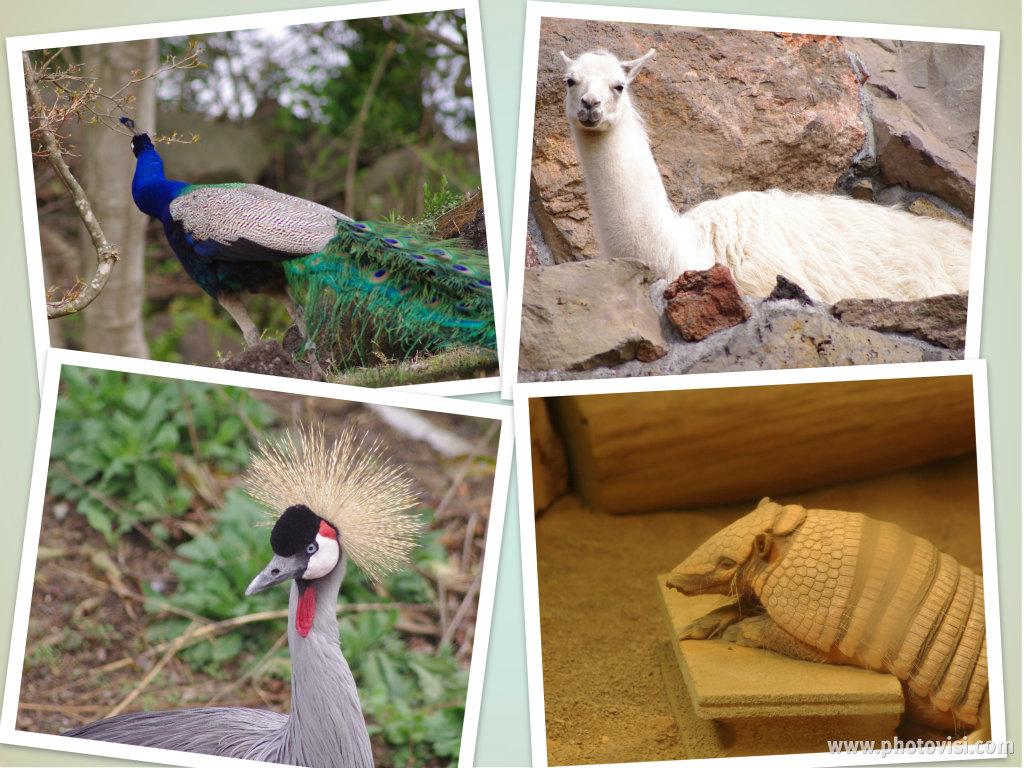 324_10動物2