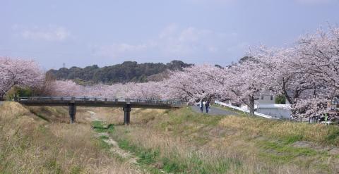 330_4橋