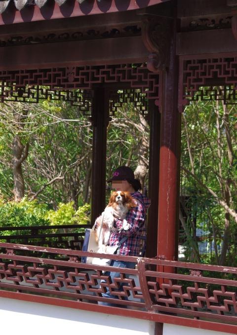 501_8中国庭園