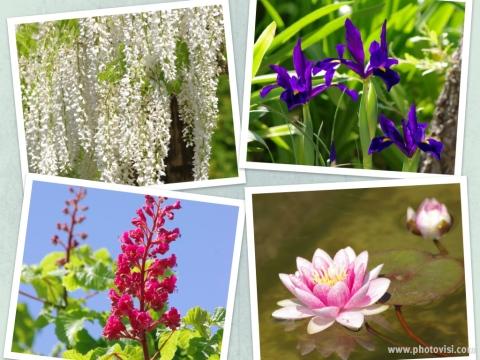 501_13園内の花