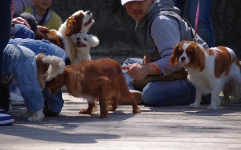 4_犬団子