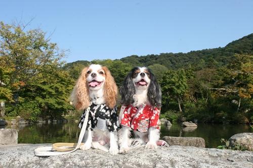 円山公園-1