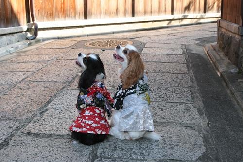 京都散策_0046ー石垣の小路