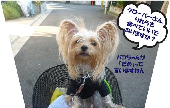 12_20130921022544ab7.jpg