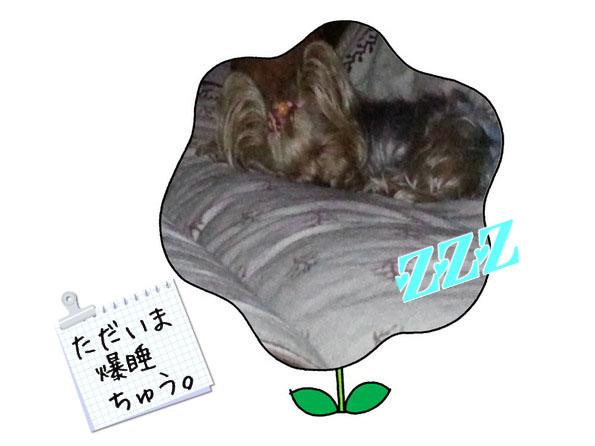 14Lylera in sound sleep…外は雨