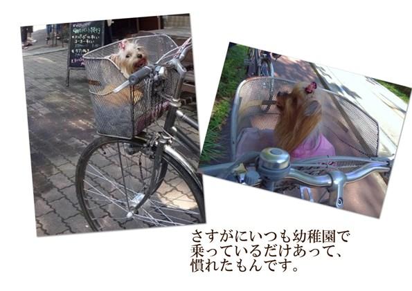 5サイクリングに行こう!