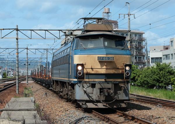 AM9P1498_1.jpg