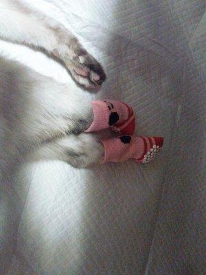 タヌさんのお足