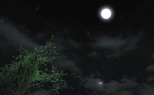 見上げると美しい満月
