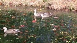 森松河川公園