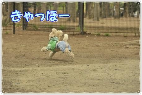 自由犬、小鉄