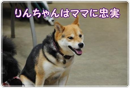 集合4 りんちゃん