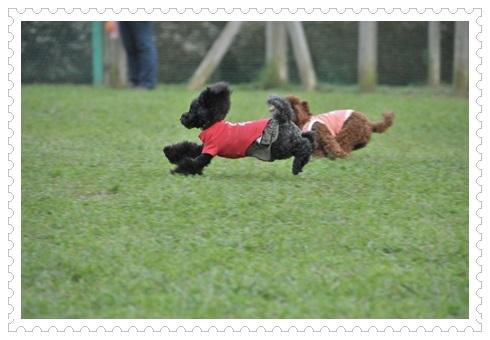 飛行犬ルナ