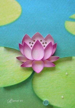 Water Lily Water Lily