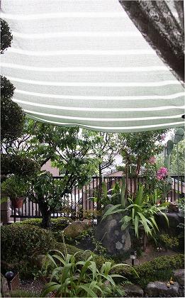 日除けに降り溜まる雨