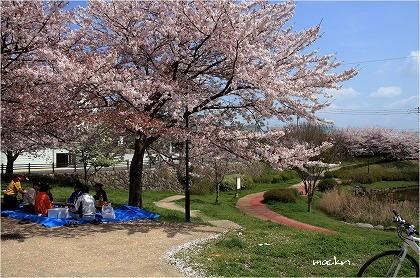 公園の桜花