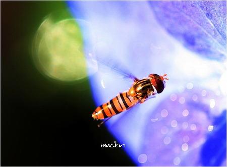蜜を求めて