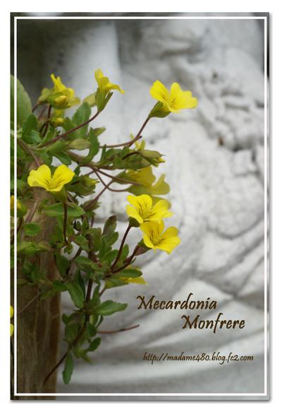 メカルドニア モンフレールweb用B