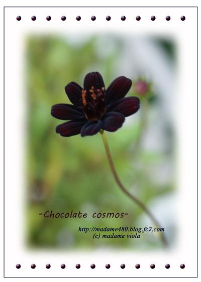 チョココスweb用8月A