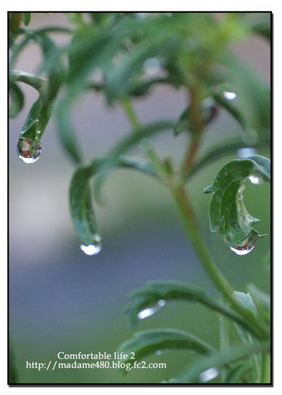 水滴web用