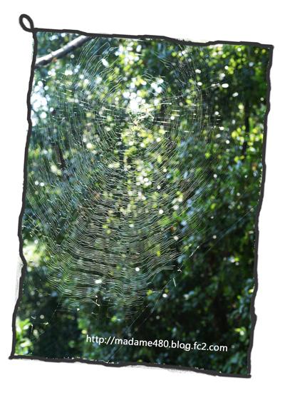 クモの巣web用A