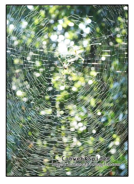 クモの巣web用B