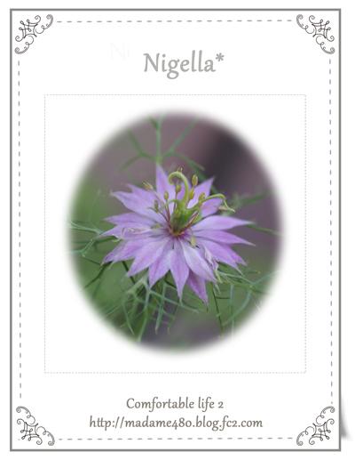 ニゲラweb用開花