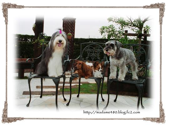犬庭で4匹web用