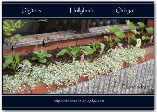 西トレリス花壇web用