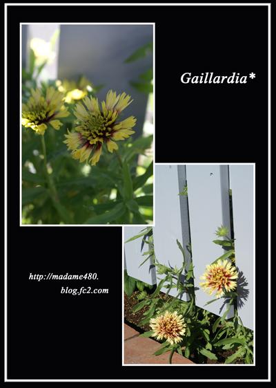 ガイラルディア11月の花web用
