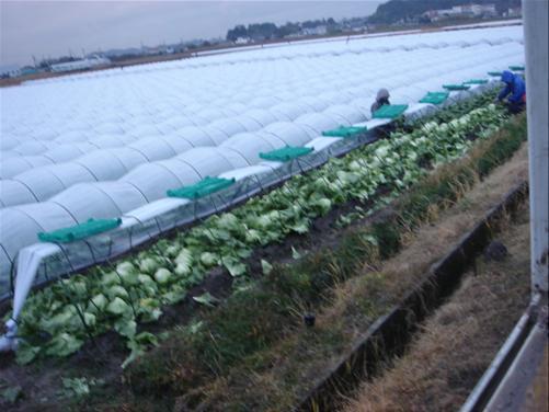 雨中の収穫.JPG