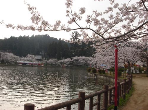 八鶴湖と桜.JPG