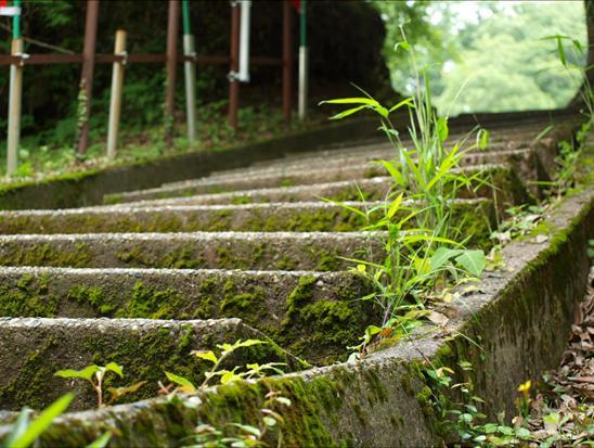 コケむした階段.JPG