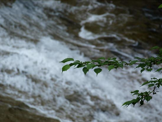 新緑の滝.JPG