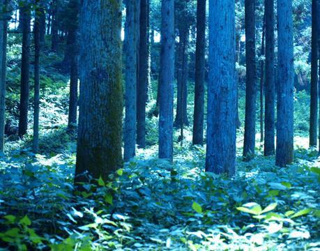 青い林.JPG