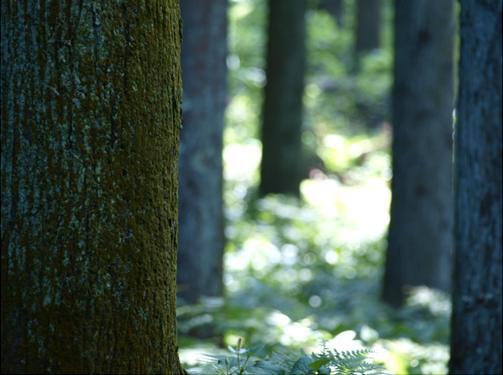 樹皮の苔.JPG