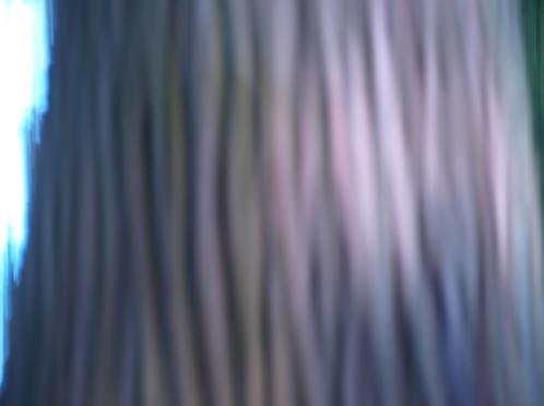 アニメの木みたい.JPG