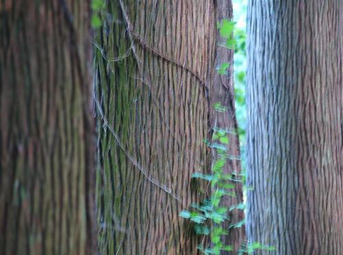 樹に囲まれた感じ.JPG