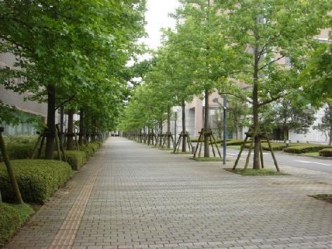 校内の並木.JPG