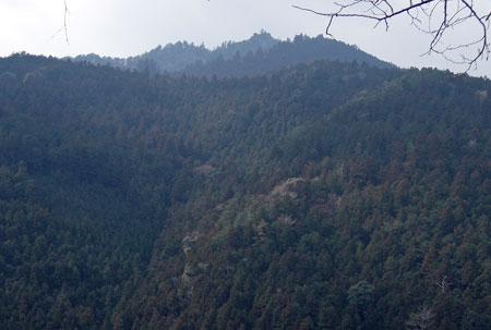 焼山寺の山.jpg