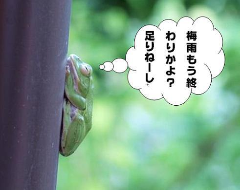 蛙の独り言.JPG
